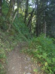 Hiking Trail off the Columbia River Gorge