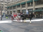Horse drawn carriage at 16th Street Mall