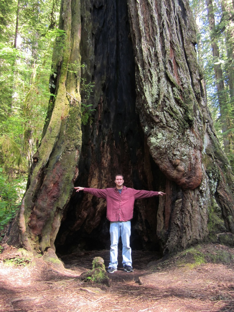 Keenan inside a redwood