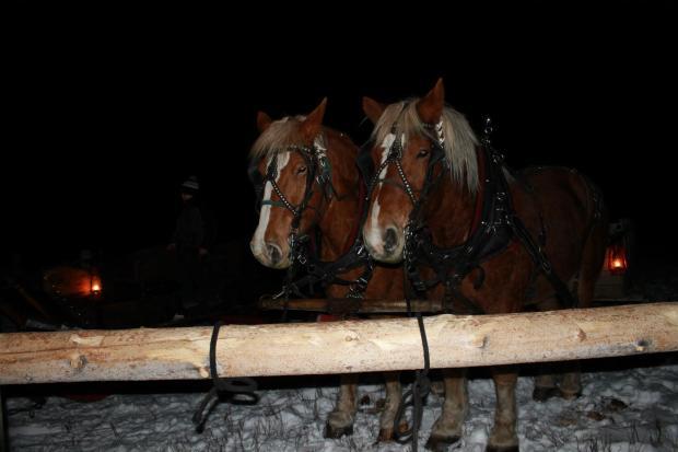 sleigh_ride_horses